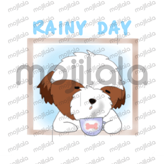 Brownie, small and cute shih tzu puppy. Brownie is lovely and nice like an angel but sometimes also lazy and capricious.