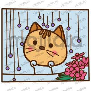 Kuchi is a Cute cat with lovable expressions.
