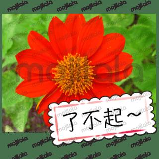 美丽的花朵问候卡
