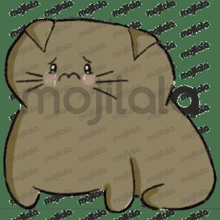 Cute cat Nikky