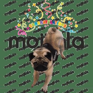 Winston the pug stickers! @winstonlepug Instagram