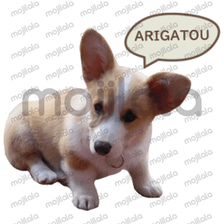 This is a set of stickers of a cute corgi puppy named Cubey !
