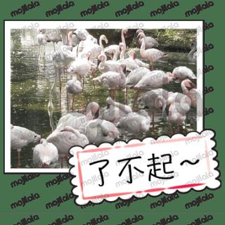 許多可愛的農場動物和祝福小卡片
