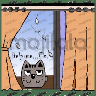 LooBu cat and friends