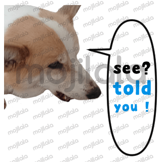 This is a set of stickers of a cute fluffy Pembroke welsh Corgi