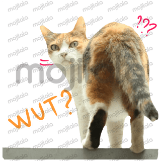 Beautiful emoticon cats