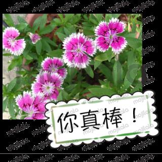 花的祝福满满