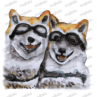 Love Shiba Inu Dogs and wish to include them in your daily conversation during this holiday? Here come the Shiba Inu Sisters and friends. Hope they bring warmth and love to your heart.