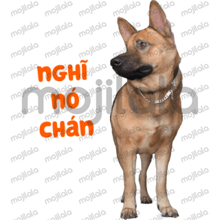This is the first sticker of my dog.  like fan page here: https://www.facebook.com/loc1411 Thank you all ˆˆ